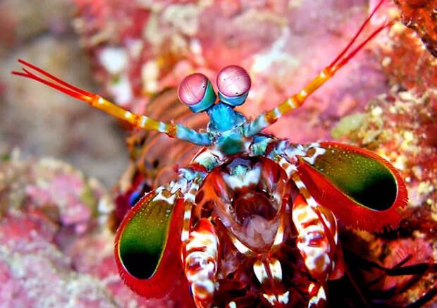 Семь самых необычных существ планеты