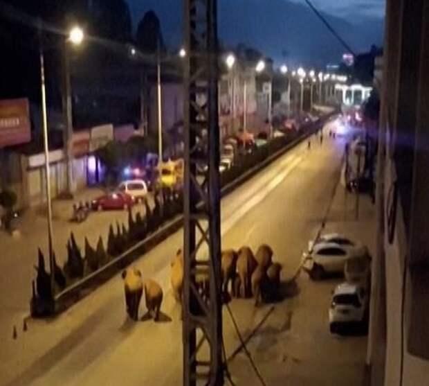 Разъяренное стадо из 15 слонов устроило хаос, промчавшись через 7-миллионный китайский город
