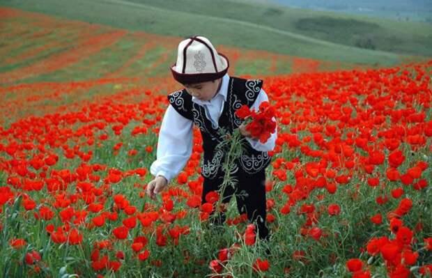 Казахстан запретил иностранцам покупку иаренду земли сельхозназначения