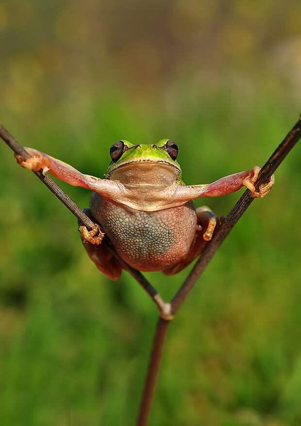 Frogs09 Оригинальные лягушки