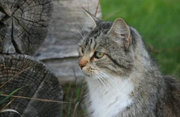 Почему кошек на Руси всегда любили и берегли