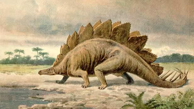 Палеонтологи обнаружили окаменелый след детеныша стегозавра в Китае