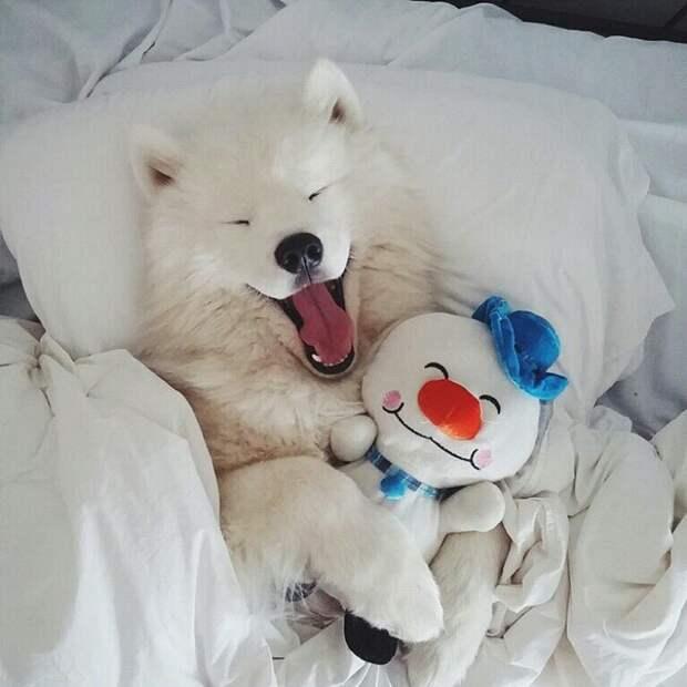 Прикольные фотографии животных полные позитива