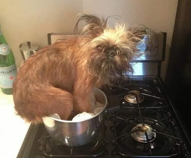 Что-то тут у вас вкусненькое спрятано? врасплох, кошки, смешные, собаки, фото, шкодники