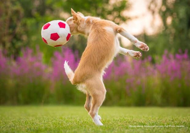 Смешные фотографии домашних животных