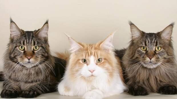 Биологи доказали связь кошек с человеком