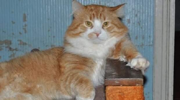 Кот из Питера зарабатывает экзорцизмом