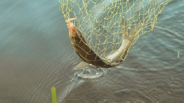 Оренбуржец может лишиться свободы за незаконную ловлю рыбы