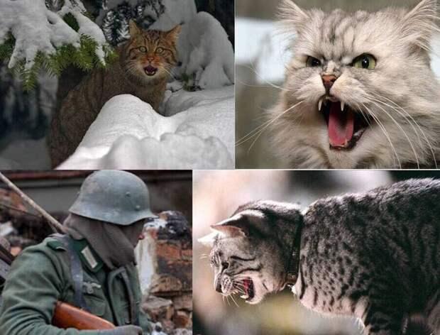 Злые русские кошки