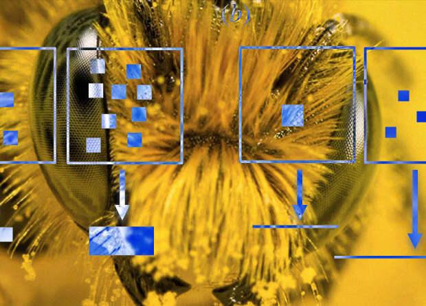 Пчелы оценили количество объектов при помощи нечисловых параметров