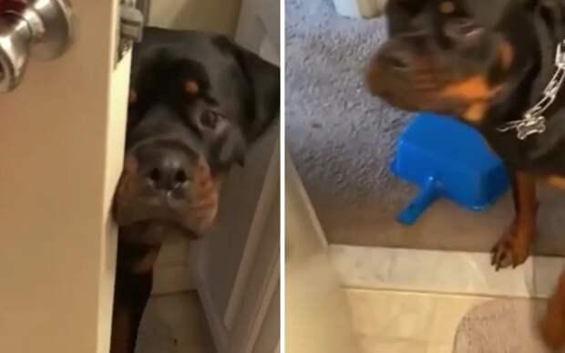 «Не смей закрывать»: пес психанул, когда его не пустили в хозяйскую комнату