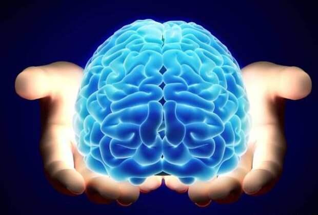 Что любит наш мозг?