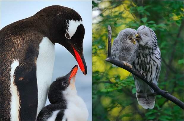 Трепетные отношения птиц к своим малышам.