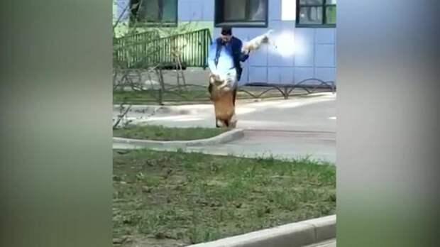 На улице Крыленко мужчина заставлял ходить собаку на двух лапах и бил ее другой собакой
