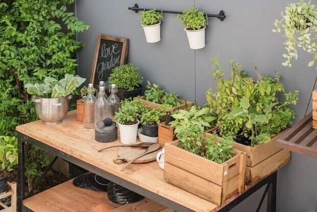 Отличные идеи огорода на балконе. Полезные советы в помощь
