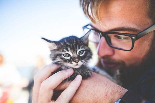 Учёные выяснили, понимают ли кошки человеческую речь