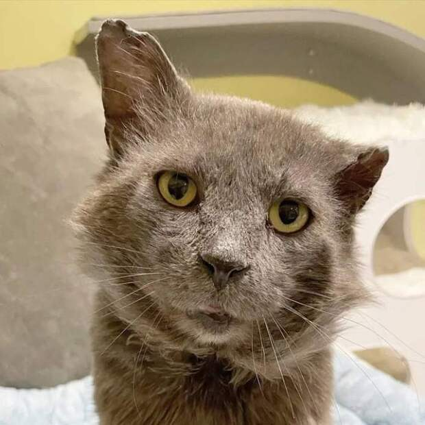 Суровый на вид кот оказался милейшим и ручным – стоило только подарить ему безопасность