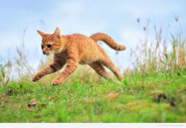 мир кошек