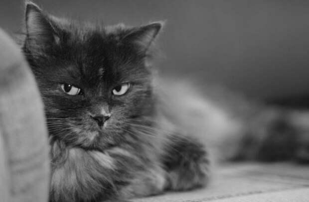 Долго ли кошки помнят обиду?