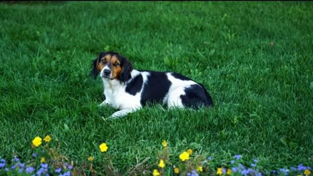 Невероятная история Джека Воробья: бывшебездомный пес, который нашел дом, потерял и вновь приобрел