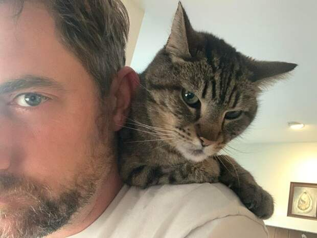 18 жизненных ситуаций, которые доказывают, что без кота и жизнь не та