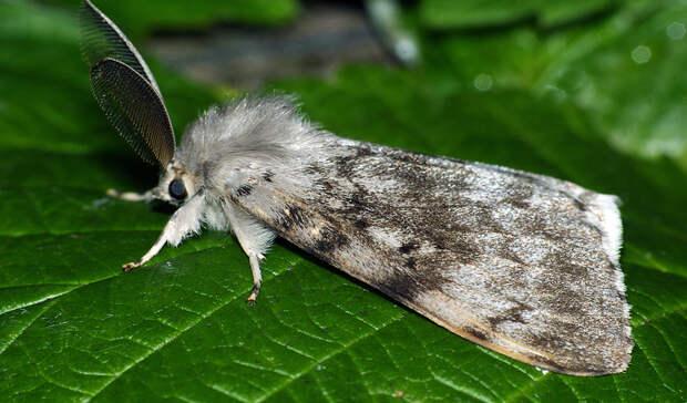В Оренбуржье ввели режим ЧС из-за насекомого, которое способно уничтожить лес