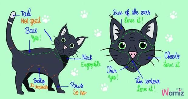 Как правильно погладить и приласкать кошку: краткий гид