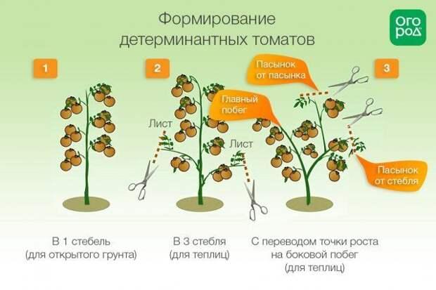 Схема формирования помидоров детерминантных сортов