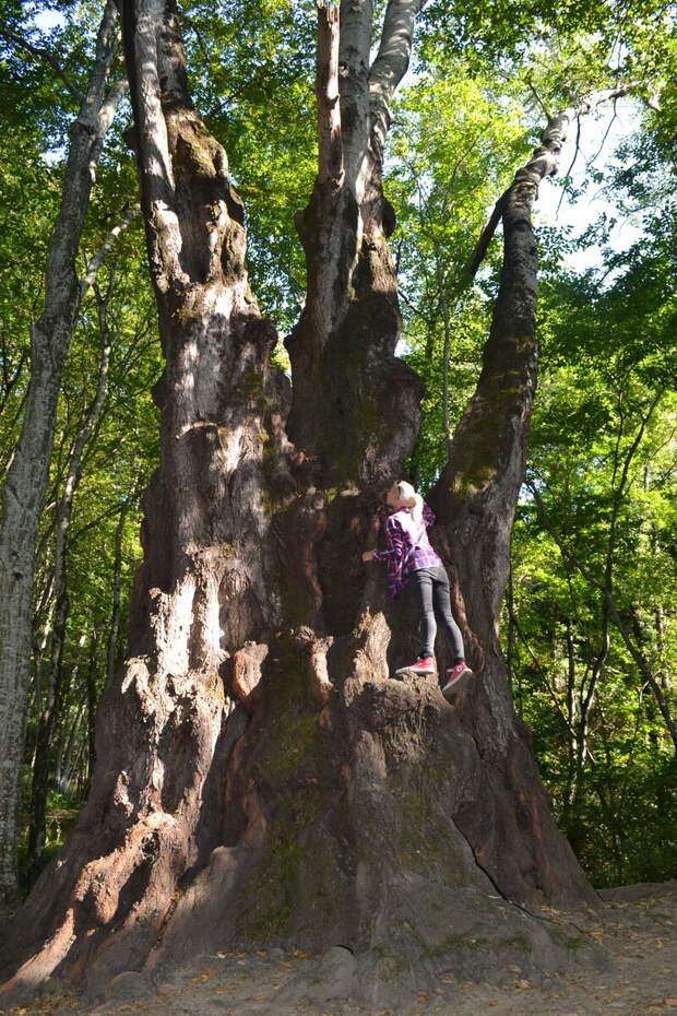 Когда находишься рядом с деревом, понятны его размеры и возраст