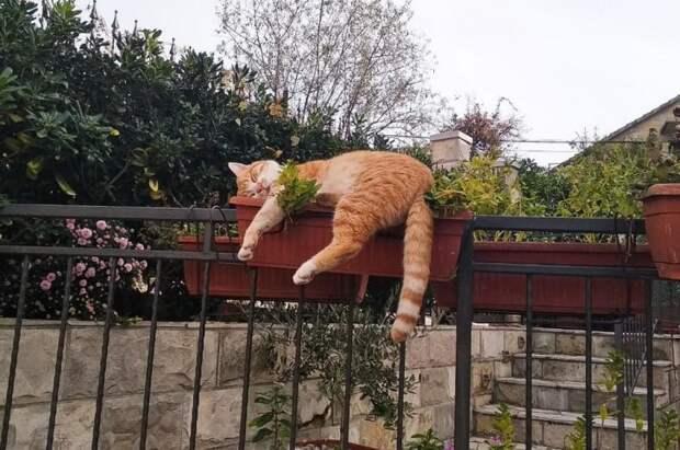 Любое место пригодно для сна, если за дело берутся профи!