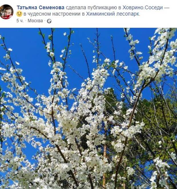 Фото дня: в Химкинском лесопарке расцвела вишня