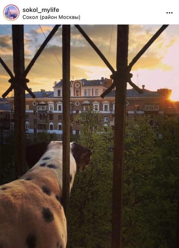 Фото дня: четвероногий любимец района наслаждается закатом