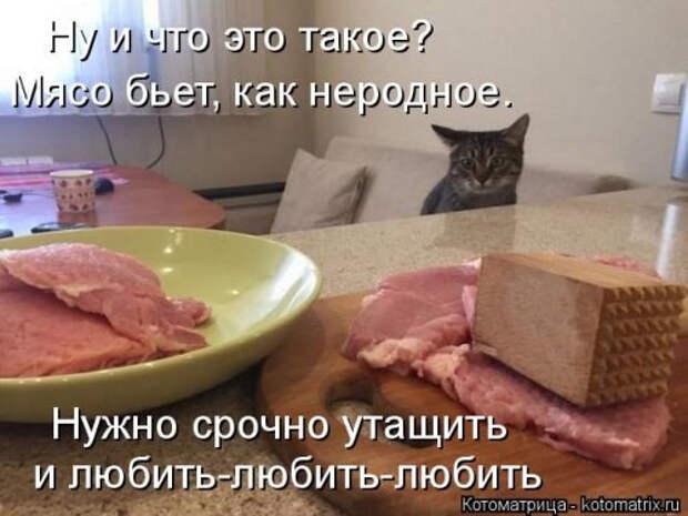 1556890780_kotomatricy-17 (500x375, 136Kb)