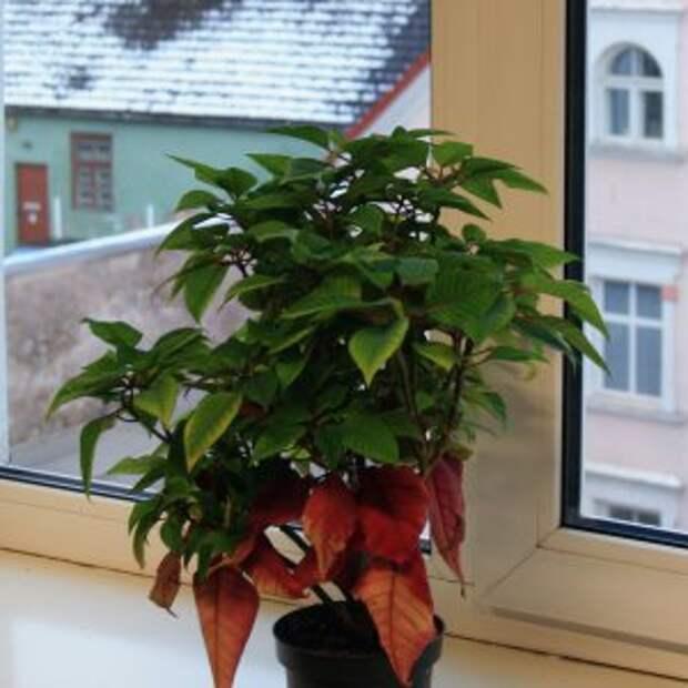 http://indoor.usadbaonline.ru/images/cache/300x300/crop/images%7Ccms-image-000010293.jpg