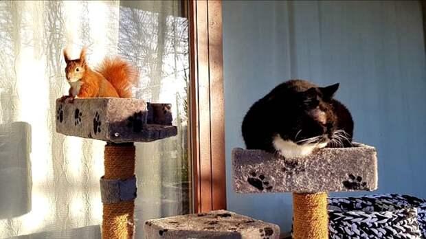 Видео: Мужчина спас бельчонка, подарил ему дом и лучшего друга — черно-белого кота