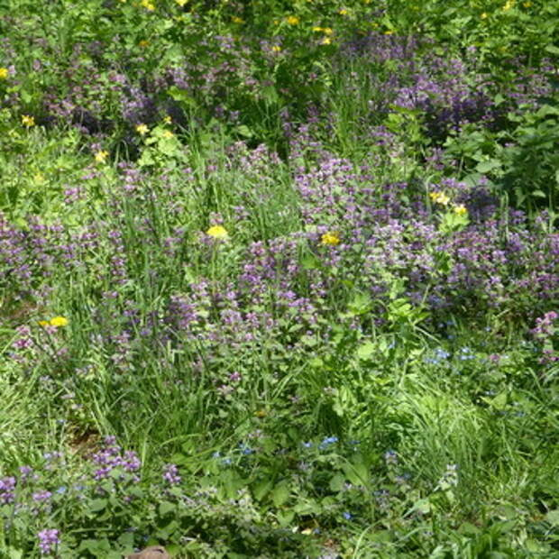 Лесные цветы и травы: и названия растений лесной полосы