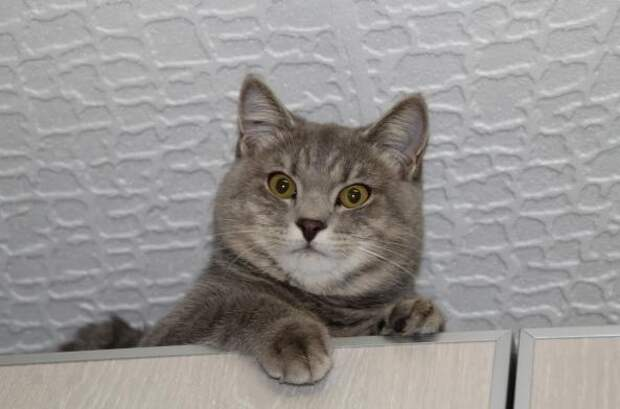 Хозяева отдали кота в добрые руки, а через два года он к ним вернулся