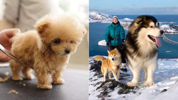 30 редких фактов о собаках, которые не оставят никого равнодушным