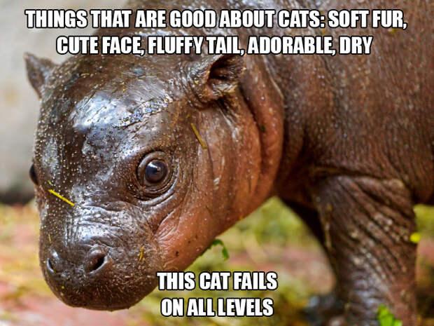 Самый страшный и ужасный кот