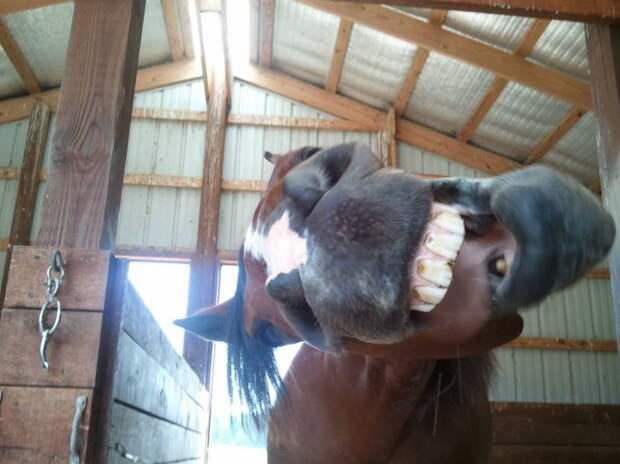 Смешные картинки и фото приколы (11 фото)
