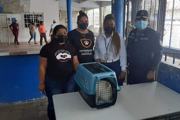 Кот-наркокурьер пытался пронести наркотики в тюрьму
