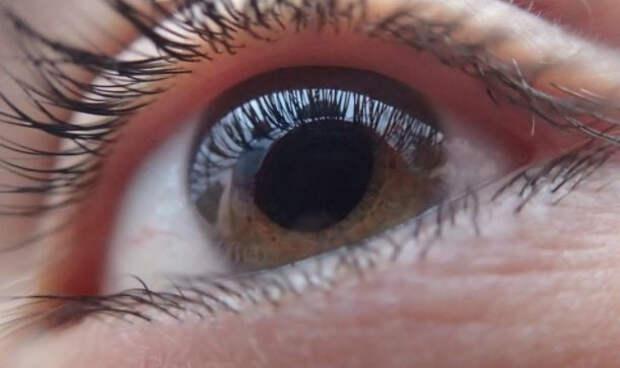 Офтальмолог Куренков развеял миф о пользе моркови и черники для зрения