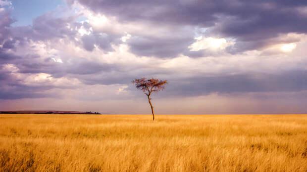 Sabana africana by Chema Rodriguez on 500px.com