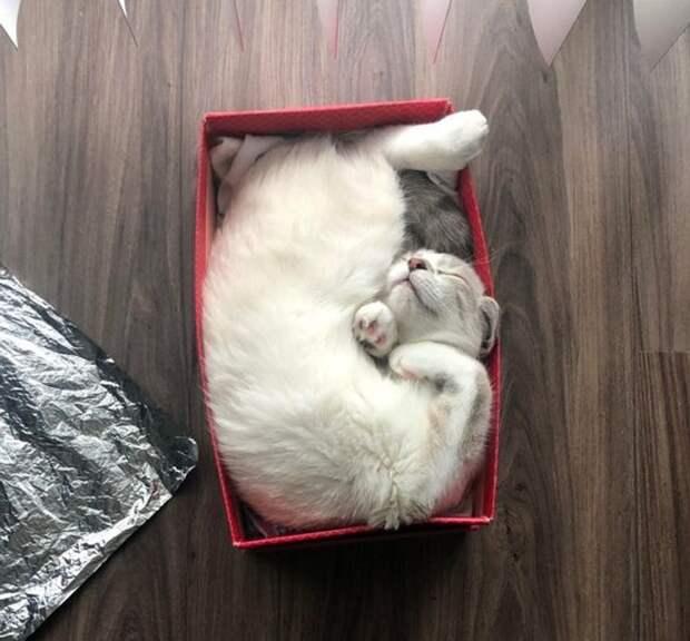 22 котика, которые как никто другой умеют находить уютное местечко