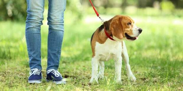 Специальный сервис на mos.ru помогает возвращать потерявшихся кошек и собак
