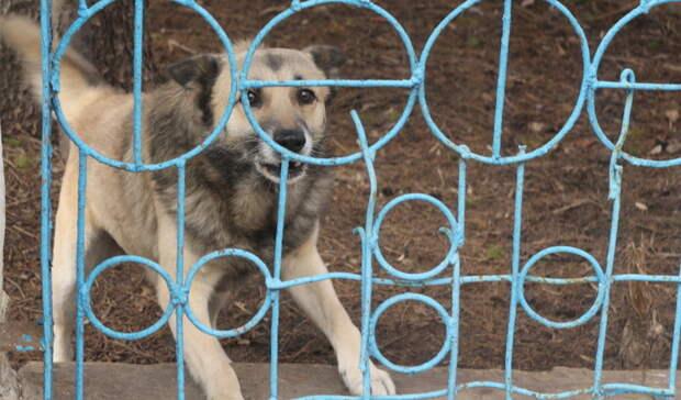 Три собаки идве кошки вБелгородской области заболели бешенством сначала года