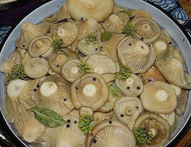 ЛУЧШАЯ ПОДБОРКА ЗАСОЛКИ ГРИБОВ НА ЗИМУ! 1. Засолка грибов ...