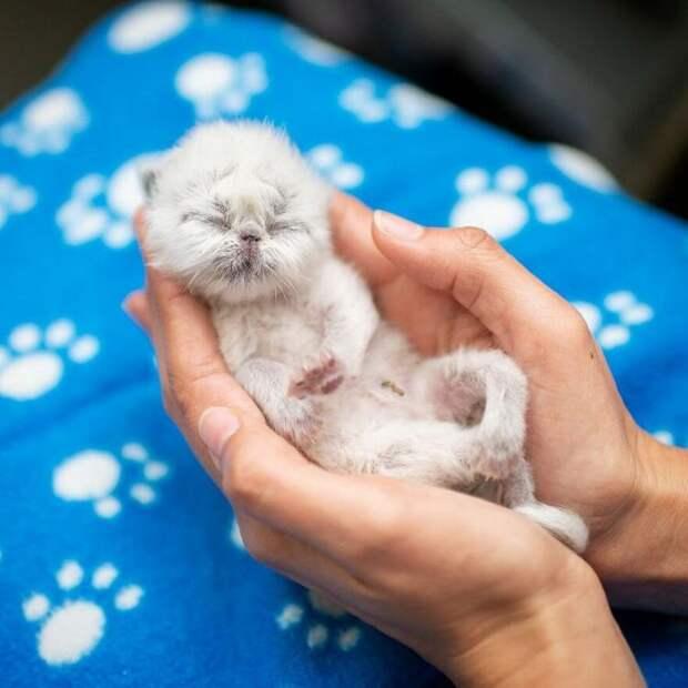 Котенок по прозвищу Дедуля покоряет сердца людей