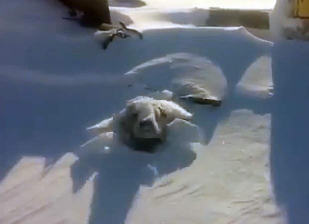 Собаку в будке засыпало снегом