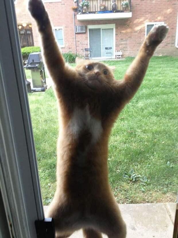 20 забавных фото животных, которых забыли пустить домой